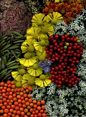 54661-01 flowers and berries (horticultural art) Tags: flowers berries hosta sedum allium boragoofficinalis clethra convallaria heleniumautumnale solanumdulcamara supershot tuberosum horticulturalart flowersandberries