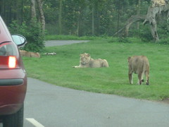 """Longleat Safari Park • <a style=""""font-size:0.8em;"""" href=""""http://www.flickr.com/photos/81195048@N05/8017660274/"""" target=""""_blank"""">View on Flickr</a>"""