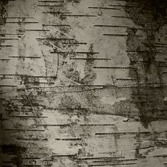 Monarch 1 (wood_owl) Tags: ohio abstract tree texture nature monochrome arboretum scratches bark monarch birch markings holden effaced betulamaximowicziana unspokenlanguages