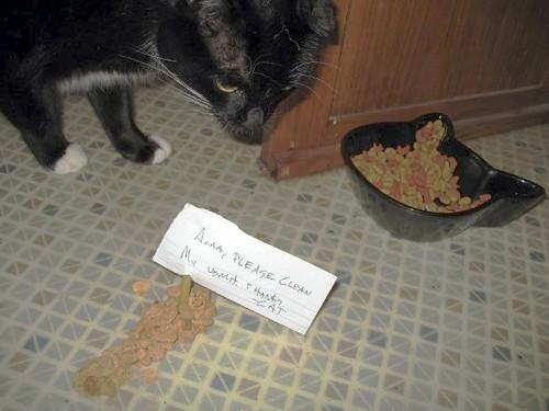 Anna, please clean my vomit. Thanks. —Cat