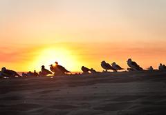 Seagull Sunset (JeezyDeezy) Tags: sunset orange seagulls beach yellow sunflare sandocean