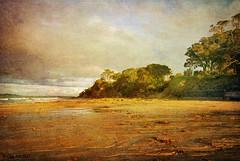 Evening Light. (Olga NZ) Tags: ocean trees light newzealand art texture yellow clouds landscape evening coast sand northshore devonport wayer narrowneckbeach artdigital artistictreasurechest magicunicornverybest magicunicornmasterpiece kurtpeiserexcellence