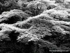 p1151 (The imaginative landscape) Tags: trees nature japan nara yamato asuka     takaichi  ealabo theimaginativelandscape  fuwarysuke