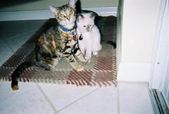 Kittens (waffleslayer) Tags: cats cute film cat kitten kittens cuddly kitties