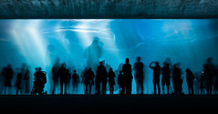 H2Glow (Deep Water Long Exposure), Monterey Bay Aquarium (flatworldsedge) Tags: california blue light water concrete aquarium bay monterey glow crowd deep silhouettes exhibit rays flicker yahoo:yourpictures=waterv2