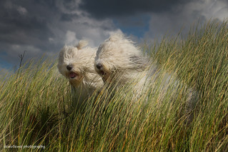 Blowing in the wind..