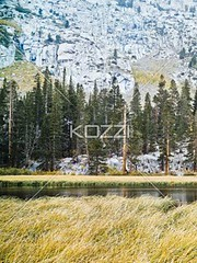 view of trees and lake (waconature8877) Tags: trees mountain lake snow cold tree green nature water grass forest outside outdoors photography day scenic peaceful tranquility nobody nopeople calm foliage growth greenery daytime idyllic tranquil calmness dense tranquilscene easternsierra colorimage beautyinnature uncultivated nonurbanscene traveldestination coldtemperature lushfoliage