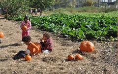 cabbagepumps (greenelent) Tags: nyc people fall field kids brooklyn nikon farm pumpkins harvest photoaday 365 redhook addedvalue