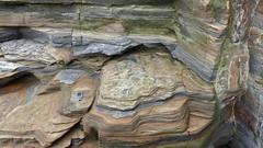 shelved (Edinburgh Nette) Tags: prestonpans august16 mudstone shale intergrading geology rocks ribbet