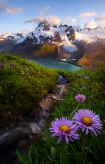 Source (David Young - LandscapeExposure.com) Tags: apelake mtjacobsen mountjacobsen bellacoola apeglacier wildflower sunset landscape stream glacier coastmountains asters d810 nikon britishcolumbia