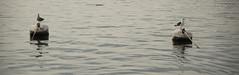Muelle (...PePi...) Tags: punta del este pier muelle rio de la plata uruguay sea oceano seagull old man gaviota chica girl fishing father son kid