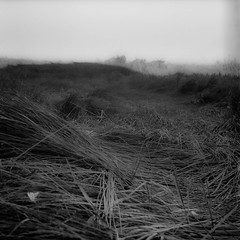+-+ (http://fotocelluloide.tumblr.com) Tags: bn blackandwhite bw rolleicord iv film argentique scan twinlens trix hc110 e xenar tessar landsacpe pellicola 120 6x6 square