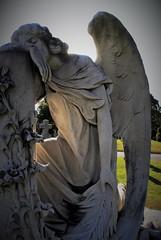 and the angel wept (f o t o o r a n g e) Tags: gravemarker angel mounthopecemetery toronto