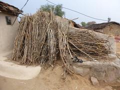 KhajurahoCycling079 (tjabeljan) Tags: india khajuraho cycling platteland village dorp