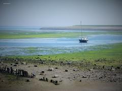Wadden bij De Cocksdorp (bcbvisser13) Tags: landschap panorama zeilboot eb zandpaaltjes zand alg stenen water waddenzee kustlijn dijk decocksdorp gemtexel noordholland nederland eu meeuwen