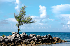 a place I won't forget (-gregg-) Tags: freeport bahamas tree ocean water sky clouds rocks