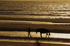 Belgian coast (Natali Antonovich) Tags: belgiancoast northsea sea water landscape wenduine parallels lifestyle relaxation romanticism romantic silhouette horse animal reflection seasideresort seashore seaboard seaside
