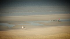Going far (babs van beieren) Tags: people beach couple scenery blankenberge ocean sea emptiness soft belgium