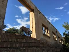 (emed0s) Tags: cris decay building sky dog kira