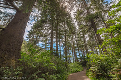 The Woods of Oswald West (Samantha Decker) Tags: ca california canonef1635mmf28liiusm canoneos6d hdr highdynamicrange or oregon oswaldweststatepark pnw pacificnorthwest samanthadecker uwa forest wideangle woods nehalem unitedstates