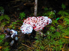 Fungi (leyannmeau) Tags: nature natural strathconapark beautiful turtleisland