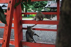 Today's Cat@2016-09-23 (masatsu) Tags: cat thebiggestgroupwithonlycats catspotting pentax mx1
