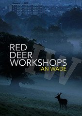 Red Deer Photography Workshops - Ian Wade (Disorganised Photographer - Ian Wade - Travel, Wil) Tags: red deer bristol workshops ian wade wildlife photography i am now offering oneonone photographing rut this is one natures great events can be photographed edge the workshop run saturdays sundays cost £60 for 90 minutes more information drop me an email