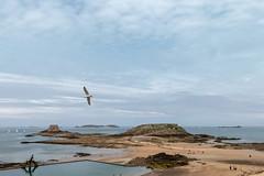 Saint Malo (JiJi-aime) Tags: st malo grand bé petit mer iles marée