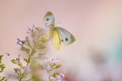 Herbstabend (anita.niza) Tags: schmetterling butterfly papillon blurred herbst autumn