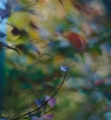 DSC_0332_01 (criscrot) Tags: nancy lorraine d200 parcsaintemarie bokeh 50mm18 automne autumn buisson