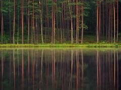 IIIIII II (batuda) Tags: trees reflection water digital forest fz5
