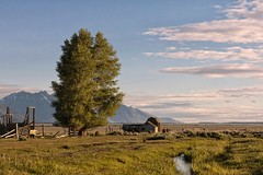 ANTELOPE FLATS (mark_rutley) Tags: sunrise nationalpark barns jackson mormon tetons jacksonhole usroadtrip gtnp mormonrow