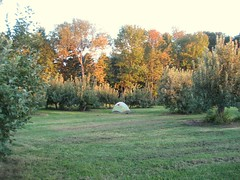 Evening Orchard Camp Out (artiefischer) Tags: maine orchard campvibes