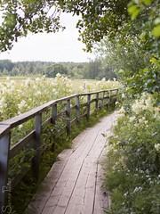 20120714_1774b (Fantasyfan.) Tags: flowers sea summer nature topv111 espoo finland evening path shore fantasyfanin