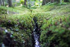 Kokedera - the Temple of Moss (Christian Kaden) Tags: plant japan temple moss kyoto pflanze pflanzen arashiyama    kioto kansai moos  tempel       saihoji  kokedera