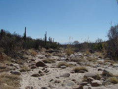 Wash along Blackett Ridge Trail (ToddStapleton) Tags: arizona southwest catalina desert tucson catalinamountains sabinocanyon santacatalinamountains santacatalina blackettsridge blackettsridgetrail toddstapleton sabinocanyonnationalrecreationarea