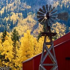Fall colors (Seldom Scene Photography) Tags: autumn color fall windmill barn colorado aspen omd olympusem5 olympusm1250mmf3563