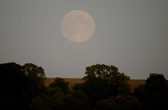 Moonrise (SteveJM2009) Tags: uk autumn trees light sky moon field rising evening countryside horizon low harvest september full fullmoon moonrise wiltshire harvestmoon 2012 stevemaskell upavon moonillusion wilts