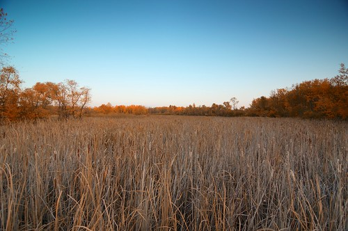 Harvest Moon _2012_09_29_18-45-52_DSC_2760_©LindsayBerger2012