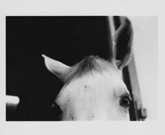 IMG_0016 (Reyna Sara Photography) Tags: horses horse france animal cheval minolta head ears personality loire lecadrenoir
