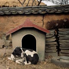 (*YIP*) Tags: dog 120 6x6 film mediumformat square asia epson kiev kiev60 iso160 colorimage v500 epsonv500 yipchoonhong