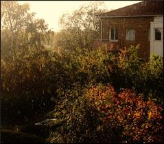 Rainy sunshine (Marie EG) Tags: autumn sunlight rain skne october trelleborg sdersltt d3000