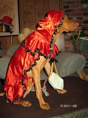 Rose the Hungarian Vizsla as Little Red Riding Hood (Pixel Packing Mama) Tags: adorable pixelpackingmama dorothydelinaporter 125views reallyunlimited redrulepool redclothespool flickraddictspool redmania vizslalovegroup pixuploadedsecondof2012set pixtakeninsecondof2012withcanonpowershota2000isorcanonpowershota720is somepixtakenafterfebruary62012maybewithnikoncoolpixl24orasamsungverizonandroidcameraphone pixtaken2nd2012set uploadedsecond2012set severaldoggroups rosethehungarianvizslasetrosedressedaslittleridinghood redclotheslittleredridinghoodhalloweencostume oversixmillionaggregateviews rosethehungarianvizslapuppy~dogset over430000photostreamviews