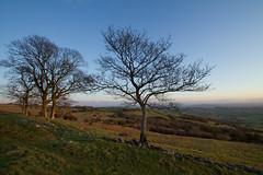 Trees in Winter (Mukumbura) Tags: blue trees winter light england sky cold green grass evening glastonbury somerset tor oaks tranquil priddy somersetlevels peacefulscene deerleap