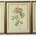 80. 3 Botanical Engravings