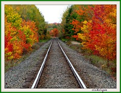 Beauty Along the Tracks~EXPLORE # 166 (clickclique) Tags: railroad trees red orange green fall colors october tracks rails 2012 abigfave foreverautumn travelpilgrems