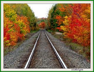 Beauty Along the Tracks~EXPLORE # 166