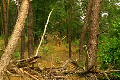 Trekvogelpad, Otterlo - Hoenderloo