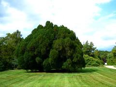 Bayard Cutting Fields Arboretum (111) (pensivelaw1) Tags: suffolkcounty newyorkstate longisland bayardcuttingarboretumstatepark