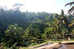 IMG_0678 (Marta Montull) Tags: holidays indonesia canon gopro malaysia kuala lumpur bali gili islands rice terraces temples monkey travel photography landscape